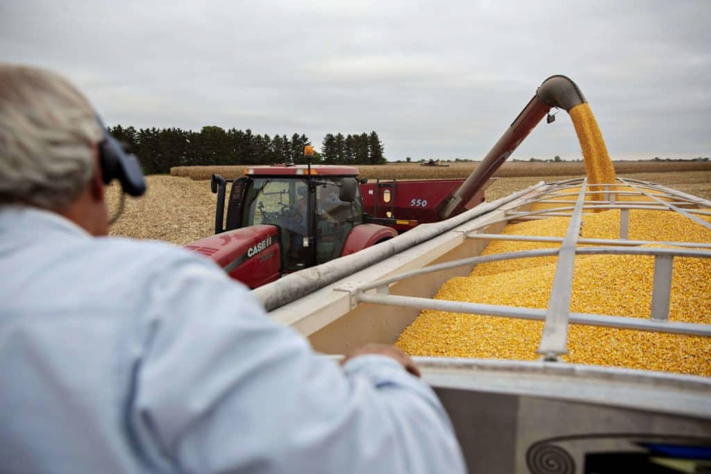 Chinas Soybean Demand Lowers by Swine Fever