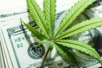 Wall Street Bank Shuts Down US Marijuana Stock Spree