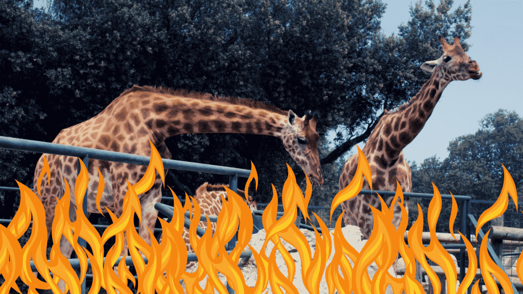 African Safari Wildlife Park's Fire Claims Lives of 10 Animals